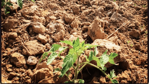 Agriculture Farming Investment Opportunities in Nigeria – How To Invest Guide